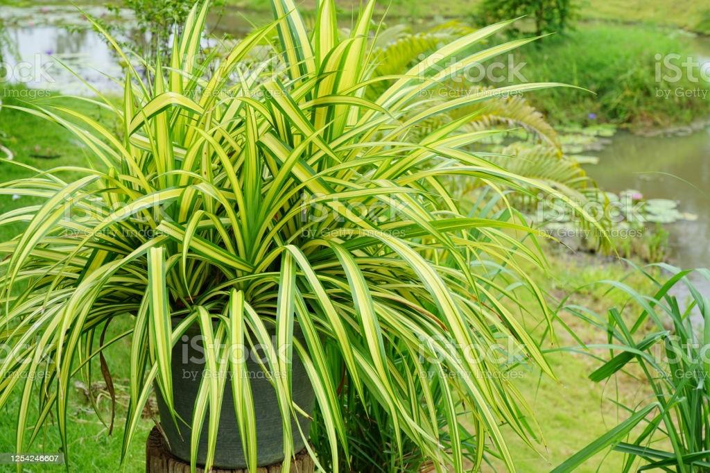 conoces-la-lista-de-plantas-que-purifican-el-aire-de-la-nasa