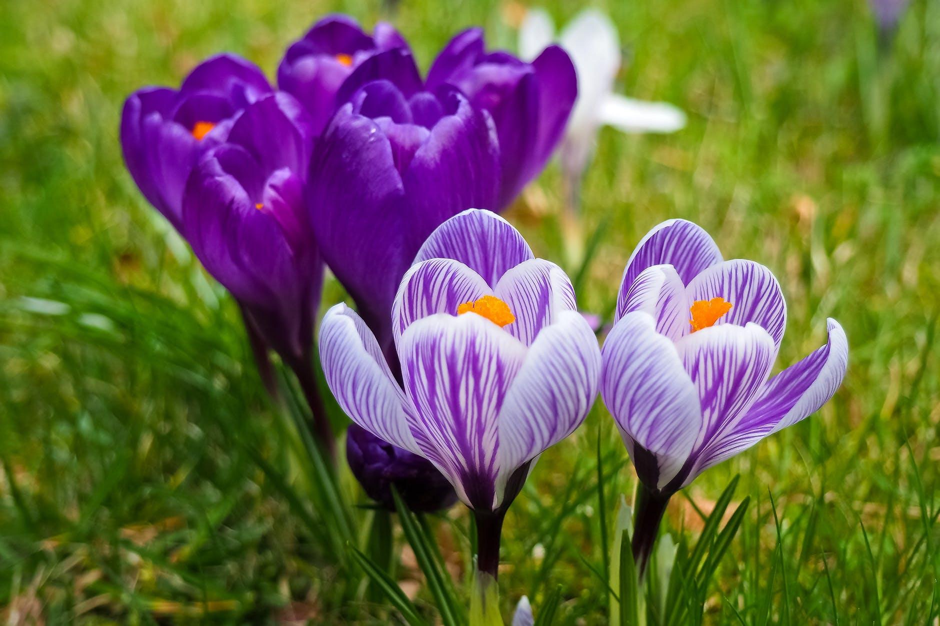 la-primavera-esta-aqui